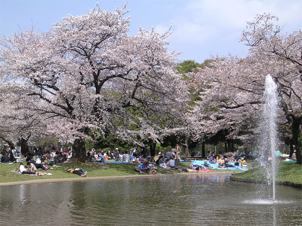 http://img49.xooimage.com/files/3/3/a/hanami-sakura2-8ffc8e.jpg