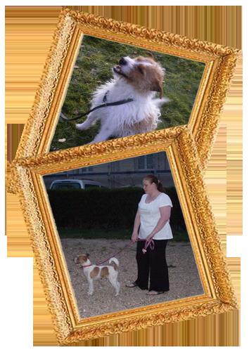 Pimousse chien à adopter