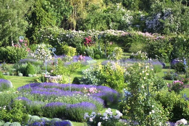 jardin au naturel, jardin de curé. Résultats Google Recherche ...