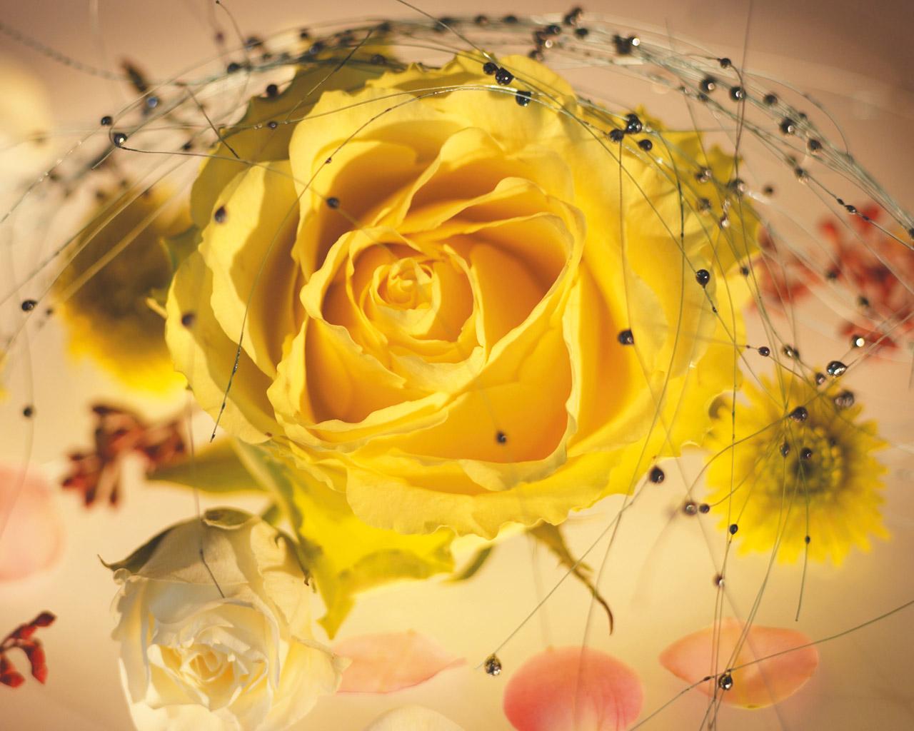 belle-fleur-fond-d-ecran-flora
