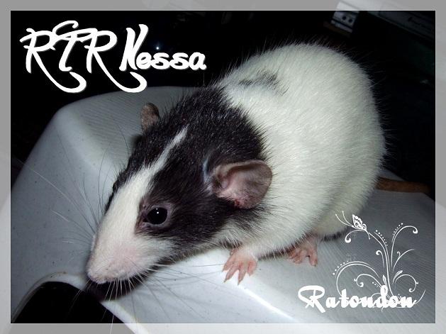Meeko xXx RTR Nessa .................... Dscf7628-1e827b4